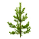 Pine - GraphicRiver Item for Sale