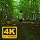 Young Man In Sportswear Running Amidst Trees - VideoHive Item for Sale