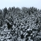 Flying Over The Winter Forest - VideoHive Item for Sale