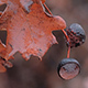 Wet Empty Acorn Caps and Oak Leaves in Autumn - VideoHive Item for Sale
