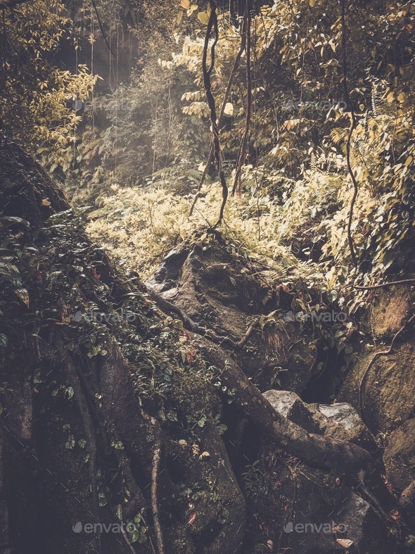 Stone rock deep in lush green jungle - Stock Photo - Images