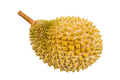Freshly harvested durian fruit of the Musang King species in Malaysia