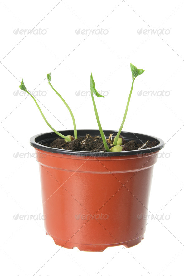 Young Plants - Stock Photo - Images