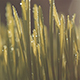 Grass with Dew - VideoHive Item for Sale