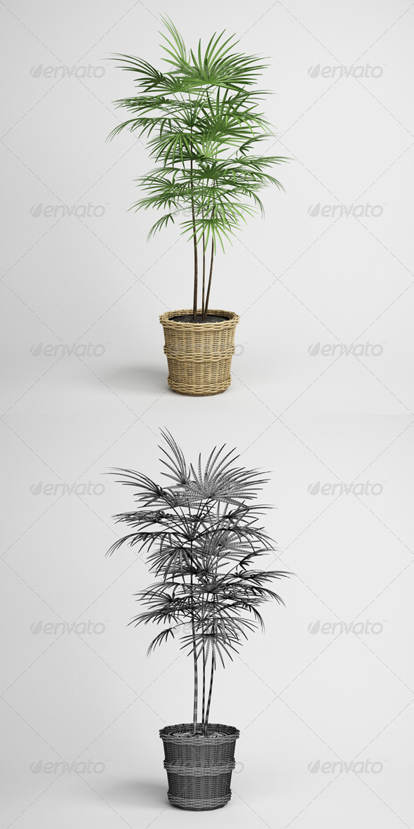 CGAxis Potted Palm Tree 16 - 3DOcean Item for Sale