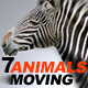 Moving Animals Pack - VideoHive Item for Sale