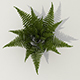 Bush fern - 3DOcean Item for Sale