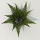 Bush fern - 3DOcean Item for Sale