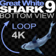 Shark 9 Swims in a Circle - VideoHive Item for Sale