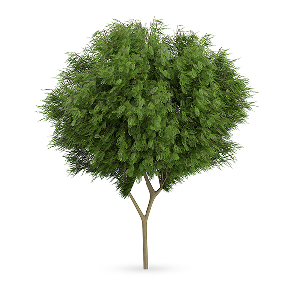 Honey locust (Gleditsia triacanthos) - 3DOcean Item for Sale