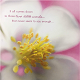 Flower Scent - AudioJungle Item for Sale