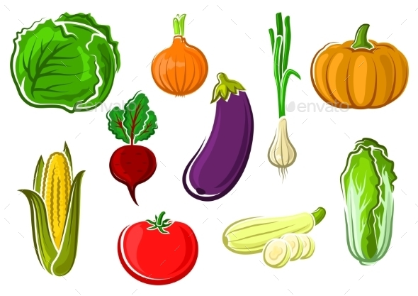 Isolated Ripe Healthy Farm Vegetables - Food Objects