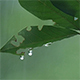 Leaves in the Rain 3 - VideoHive Item for Sale