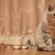 Cute Cat Playing With Toy At Home - VideoHive Item for Sale