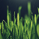 Grass with Rain - VideoHive Item for Sale