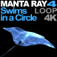 Manta Ray 4 Swims in a Circle - VideoHive Item for Sale