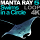 Manta Ray 5 Swims in a Circle - VideoHive Item for Sale