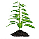 Green Plant Growing From Seed - VideoHive Item for Sale