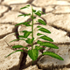 Green Plant Growing In Dried Cracked Mud - VideoHive Item for Sale