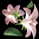 Flying Flowers(60 FPS) - VideoHive Item for Sale