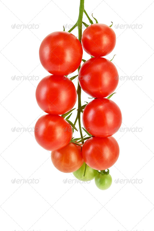 Tomatoes small on a branch - Stock Photo - Images