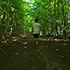 Young Man Running On Trail - VideoHive Item for Sale