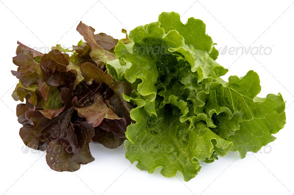 Two kinds of lettuce - Stock Photo - Images