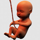 Baby Fetus - VideoHive Item for Sale