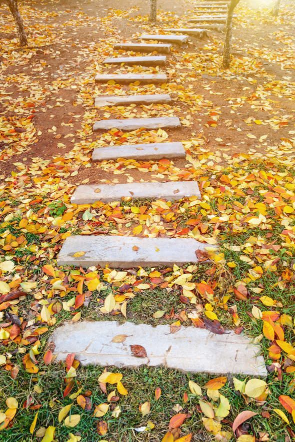 footpath with autumn leaves fall in the garden - Stock Photo - Images