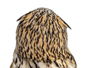 Rear view close-up of a Siberian Eagle Owl - Bubo bubo (3 years old) in front of a white background