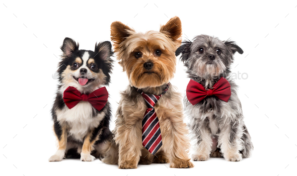 Group of dogs in front of a white background - Stock Photo - Images