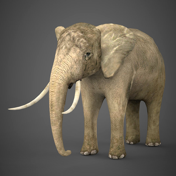 Low Poly Realistic Elephant - 3DOcean Item for Sale