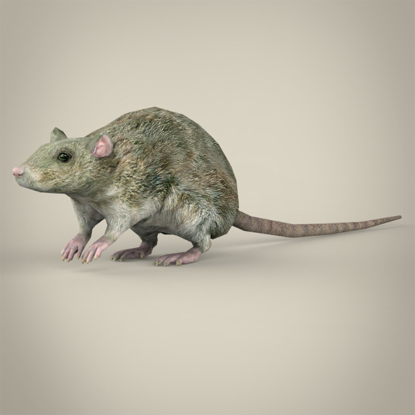 Low Poly Rat - 3DOcean Item for Sale