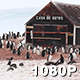 Gentoo Penguin Colony at Antarctic Base - VideoHive Item for Sale