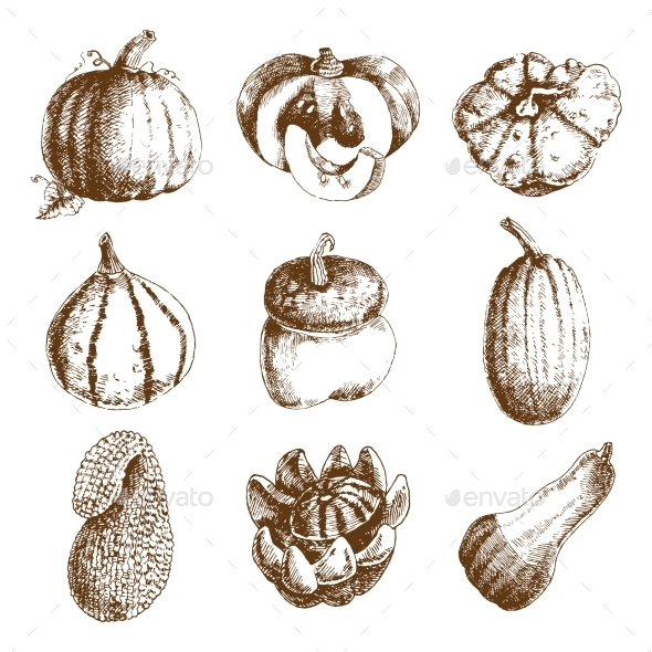 Pumpkin Hand Drawn Icons Set Doodle - Food Objects