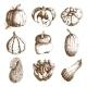 Pumpkin Hand Drawn Icons Set Doodle
