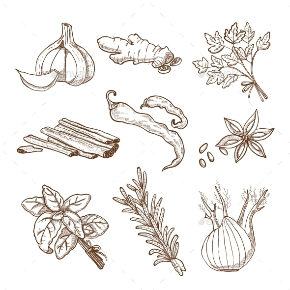 Hand Drawn Herbs and Spices Set - Decorative Symbols Decorative