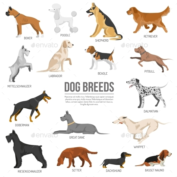 Dogs Breed Set - Animals Characters