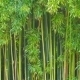 Bamboo Grove - VideoHive Item for Sale
