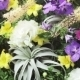 Wall Of Flowers - VideoHive Item for Sale