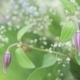 Decoration Of Flowers - VideoHive Item for Sale