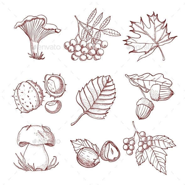 Hand Drawn Autumn Set - Decorative Symbols Decorative