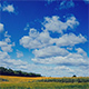 Clouds above Sunflower Field - VideoHive Item for Sale