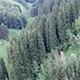 Flight Above the Evergreen Forest in the Mountains - VideoHive Item for Sale