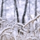 It Is Snowing In The Forest - VideoHive Item for Sale