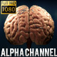 Realistic 3D Brain with Veins Animation  - VideoHive Item for Sale