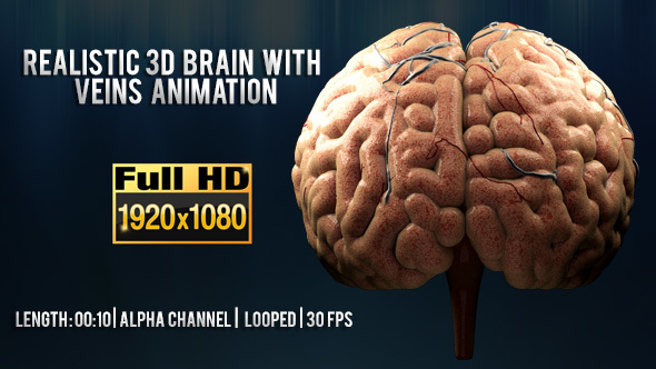 Realistic 3d Brain With Veins Animation By Rtahira Videohive