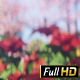 Blooming Garden - VideoHive Item for Sale