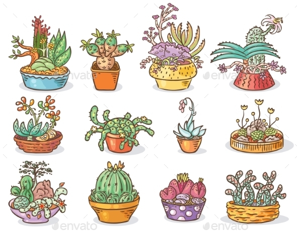 Set Of Succulent Compositions In Containers - Flowers & Plants Nature