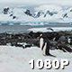Penguin Colony at Paradise Bay - VideoHive Item for Sale